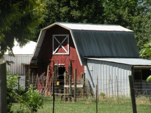 When I was eight, he built this barn for our chicken flock, rabbit herd, and horse, dogs and oow.  In the process, he taught me more about life than building for which I am eternally grateful.